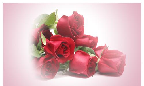 Blumenversand Bild